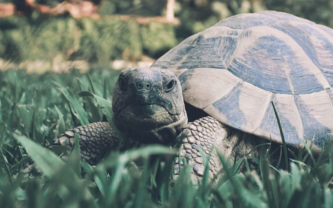 The Be Series: Be the Turtle